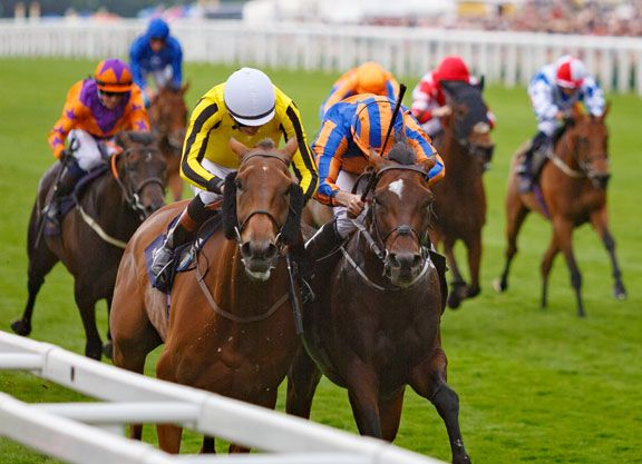 The G1 Qatar Goodwood Cup on Tuesday, the first Group 1 event of the five-day Glorious Goodwood meeting has assembled a group of 16 stayers. The Michael Bell trained Big Orange (GB) (Duke Of Marmalade …