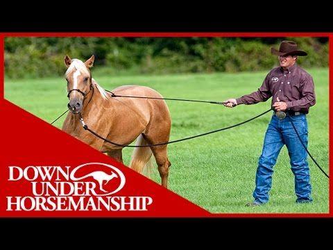 Clinton Anderson: Training a Rescue Horse, Part 1 - Downunder Horsemanship - YouTube