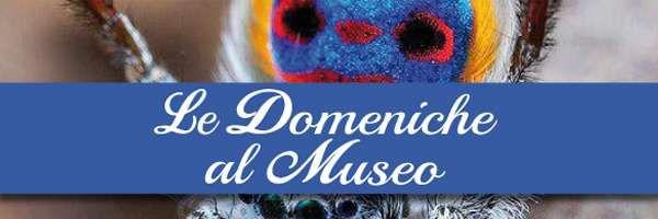 Le domeniche al Museo di Storia Naturale di Firenze