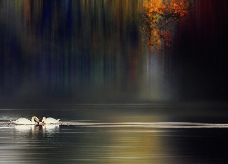 . by Silena  Lambertini on 500px