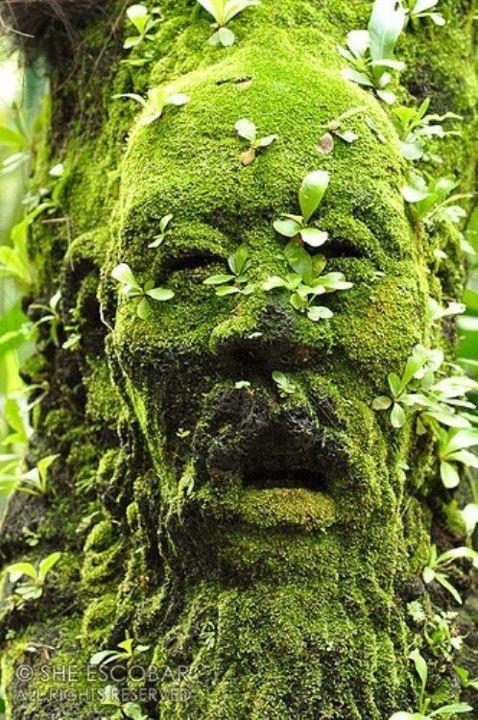 Face from Old Moss Woman's Secret Garden