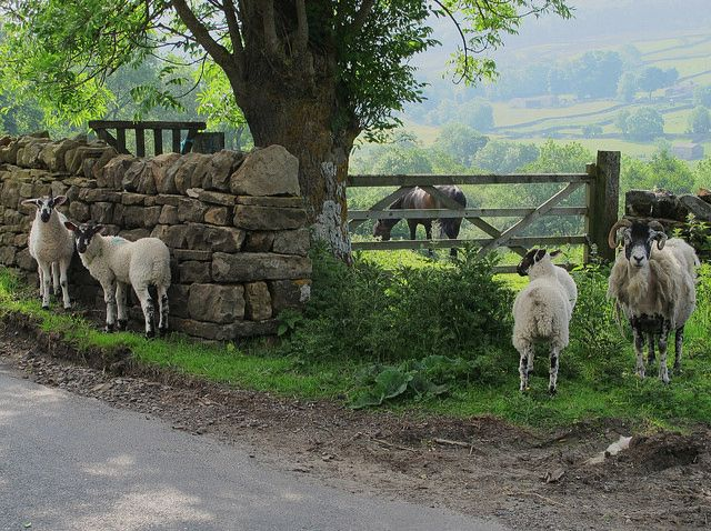 lovewall.visitbritain: Swaledale in the Yorkshire Dales by JauntyJane on Flickr ╰⊰