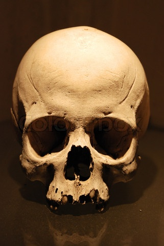 Stock image of 'Human Skull' | Skull Studies | Pinterest ...