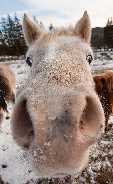 Aweee!!! So cute horse nose!