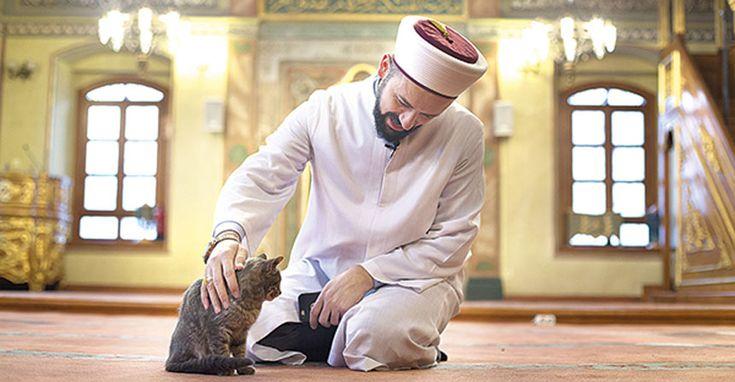 Meczet dla kotów – Rasowe Koty Domowe