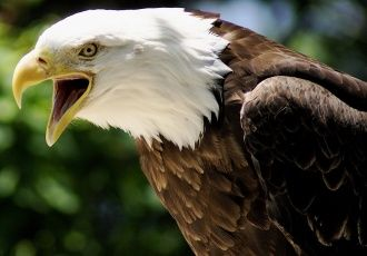Beautiful Eagle Wallpapers   Animals And Birds Wallpapers