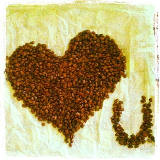 Équitable-Bio Nicaragua Maragogype : Il est un grand cru et ses grains sont les plus gros grains de café sur terre!