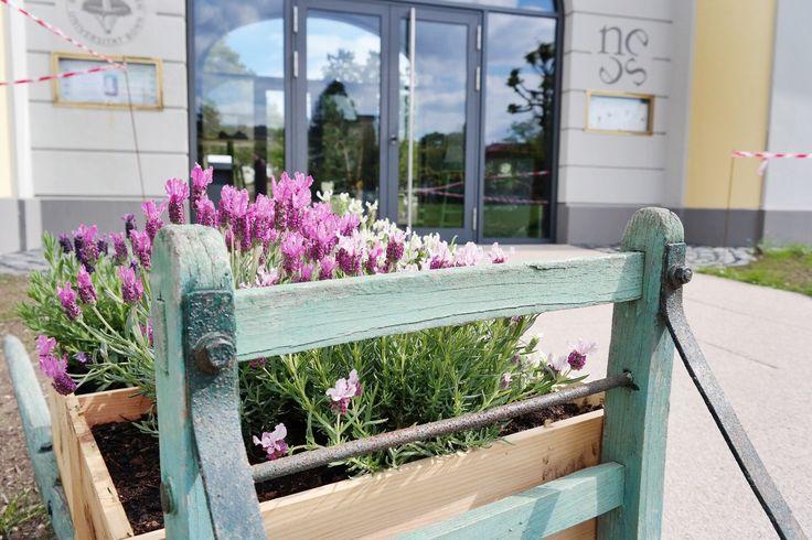 Terrace decoration with flowers / Terrassendekoration mit Blumen