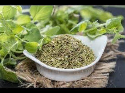 (2) El Orégano 100 Veces Mas Poderoso que Cualquier Medicina Una Sola Hoja de Esta Planta HAce esto en - YouTube