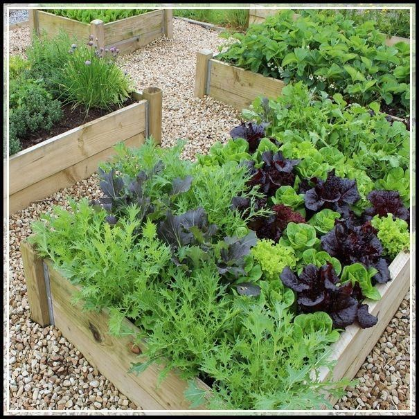 Use a raised bed for your vegetable garden. Using a raised bed is a great way to control the soil that you are planting in. It can also act as a deterrent for some pests and wildlife. You can buy a raised bed that is already made, or just use some old lumber. * More details can be found by clicking on the image. #herbgardenideas