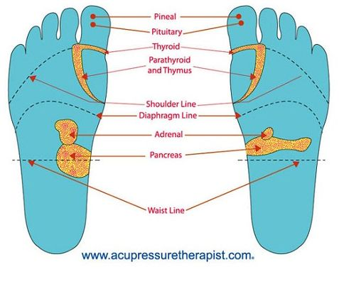 pressure points for pineal gland | functions of some important, Human body