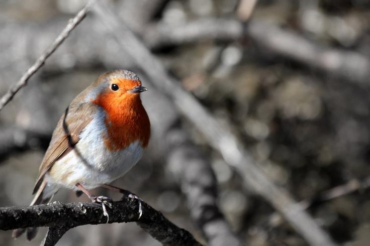 Robin Attention