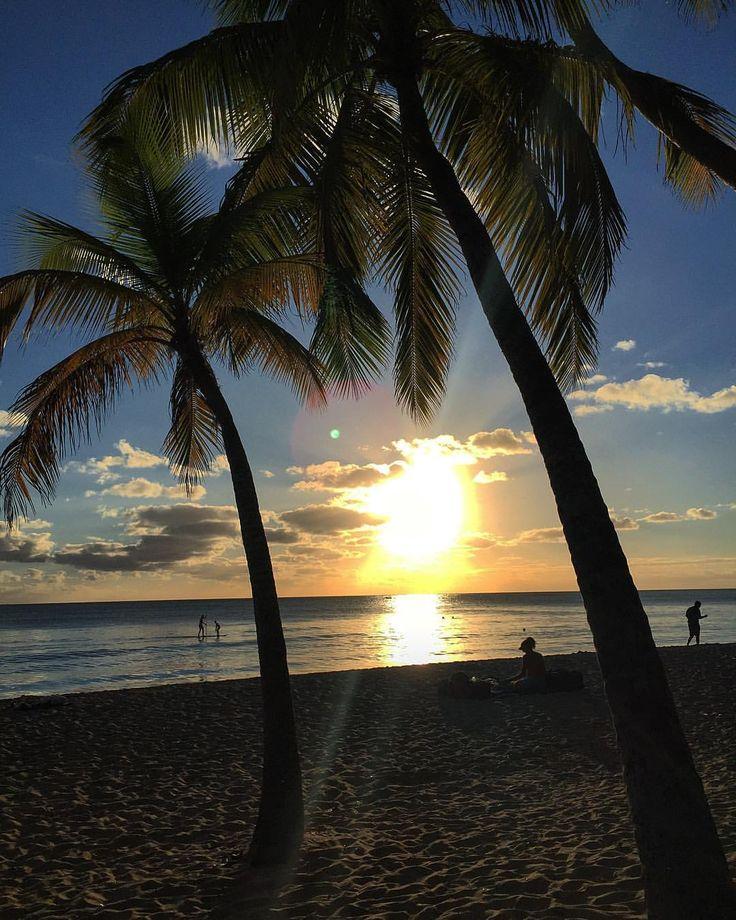 Plage des Salines  #DAY5 #travel #voyage #destination #caribbeanvibes #martinique #holidays #découverte #paradise #sea #sun #ocean #beach #goodvibes #coucherdesoleil #ballade #lespiedsdansleau #borddemer #plage #palmiers #lifestyle #life #picoftheday # #photography #love #destinationderêve