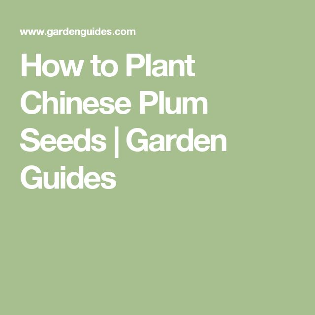 How to Plant Chinese Plum Seeds |  Garden Guides
