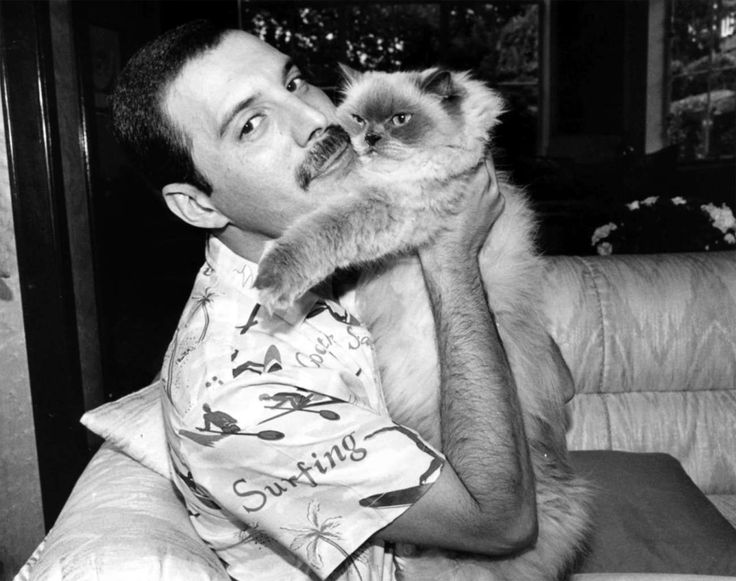 With Tiffany, 1986. Freddie Mercury had several cats over the years, including Oscar, Goliath, Miko, Romeo, and Lily.