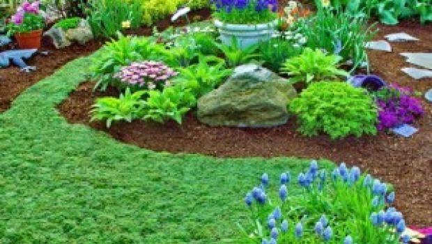 Le piante tappezzanti calpestabili sono l'alternativa giusta ad un classico prato erboso o come elemento decorativo per angoli del giardino ombreggiati.