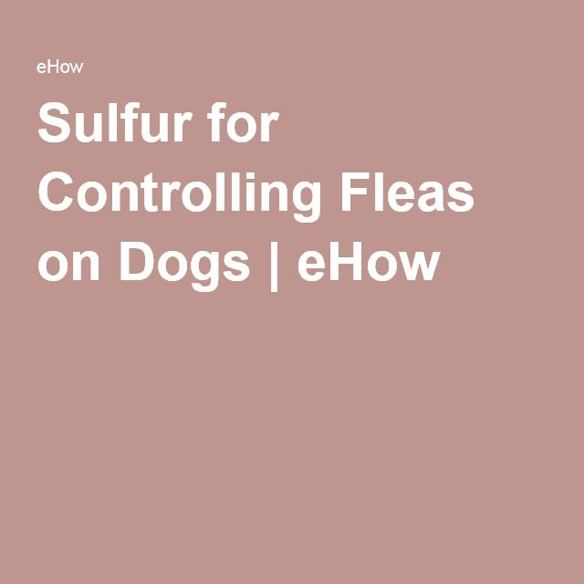 Sulfur for Controlling Fleas on Dogs | eHow