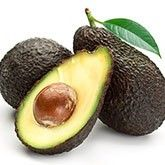 Cold Hardy Avocado Trees | Cold Hardy Avocado Trees for Sale for Sale | Fast Growing Trees