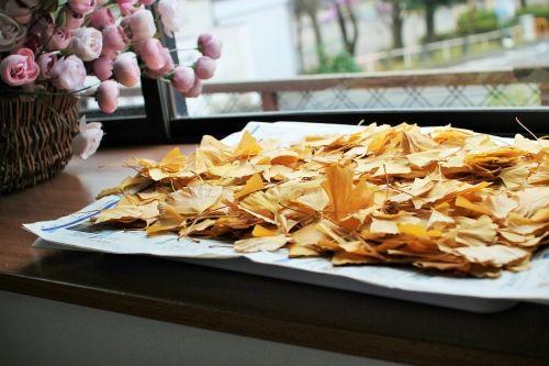「防虫剤は銀杏の葉が最強」洗って干して触るとパリパリ割れるくらいカラッカラに乾いたら茶パックに入れるだけ。