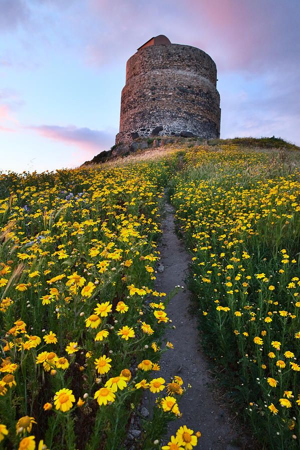 Spring Flower Field -Trail To Castle Tower - Sardinia, Italy