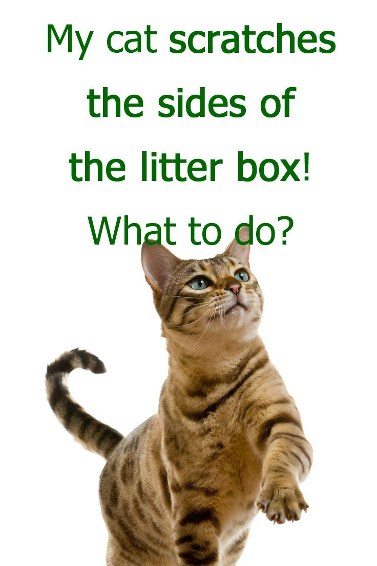 My Cat Scratches The Sides Of The Litter Box What To Do Cat Scratching Litter Box Cat Training Litter Box