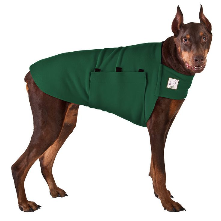 DOBERMAN PINSCHER Tummy Warmer, Dog Sweater, Dog Clothing, Fleece Dog Coat by VoyagersK9Apparel on Etsy https://www.etsy.com/listing/60943025/doberman-pinscher-tummy-warmer-dog