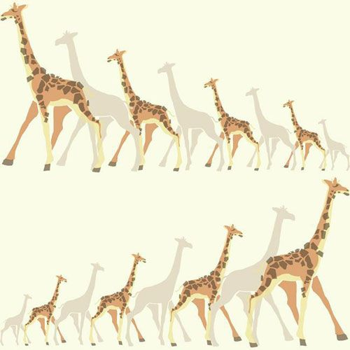 Dwell Studio Baby and Kids Giraffes Multicolor Wallpaper