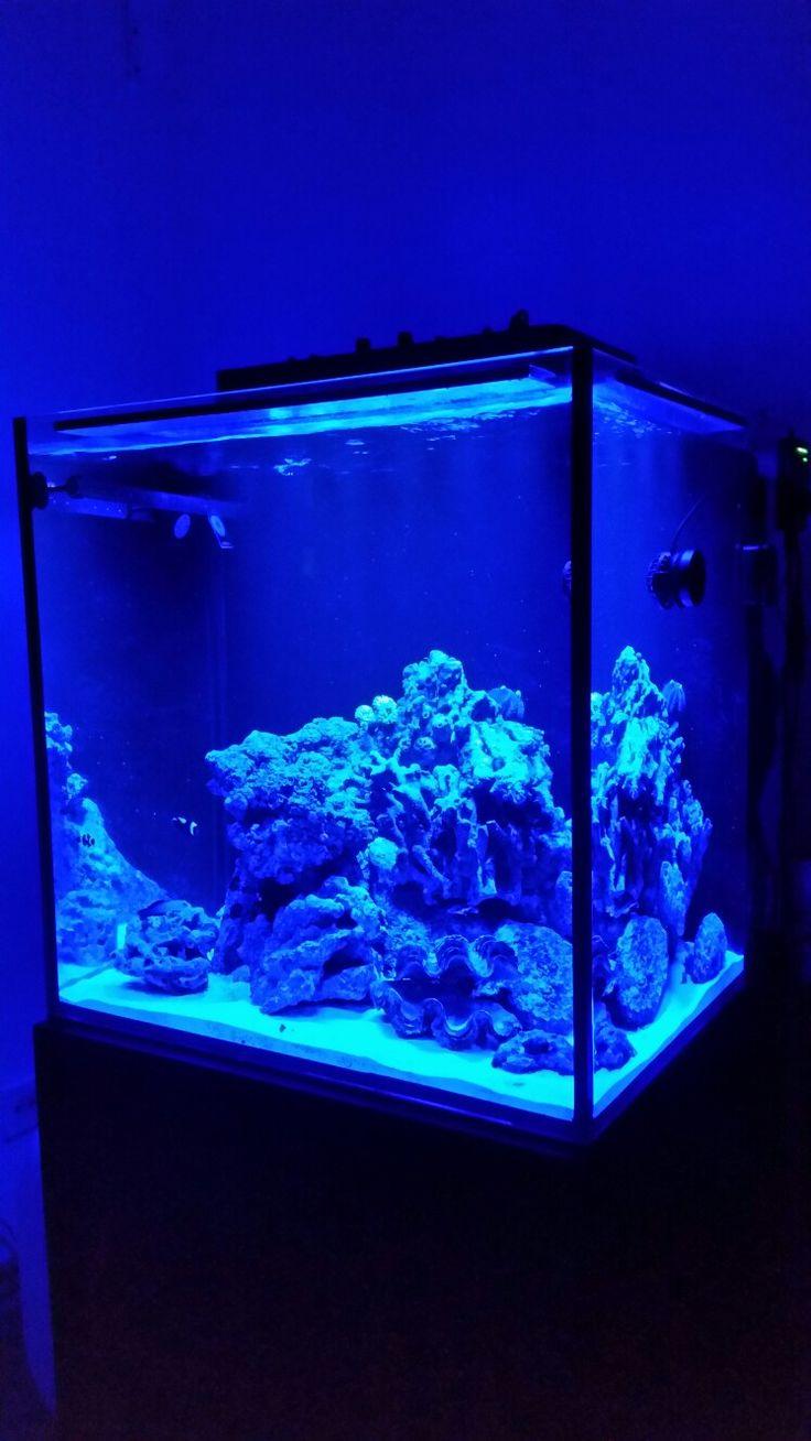 Moje morské akvárium