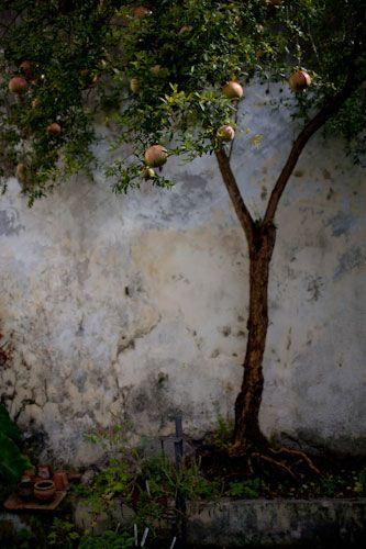 likeBeautiful Scenery, White Dots, Fruit Trees, Art Form, Photos Art, Outdoor Art In Trees, Extraordinary Trees, Lemon Trees, Wall Gardens