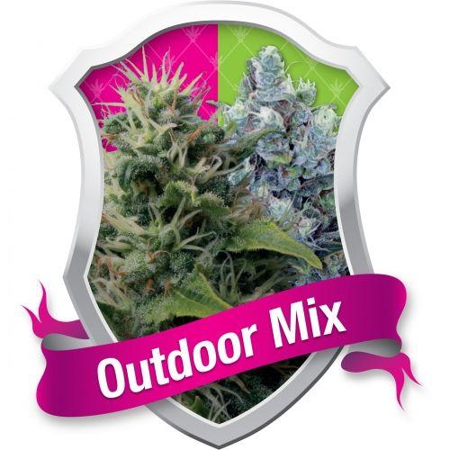 """Vous êtes indécis sur les variétés de cannabis à cultiver à l'extérieur ? Royal Queen Seeds peut faciliter votre choix avec notre Outdoor Mix. Dans chaque paquet, vous trouverez certaines de nos meilleures variétés d'extérieur, capables de supporter le dur environnement des cultures """"guérilla"""" d'extérieur. Ces plantes sont particulièrement adaptées à une culture à l'extérieur grâce à leur structure forte et…"""