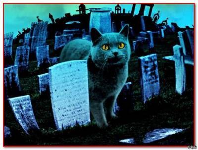 #Horror Кладбище домашних животных. Рассказ женщине о домике в деревне. #mystic, #unknown, #paranormal