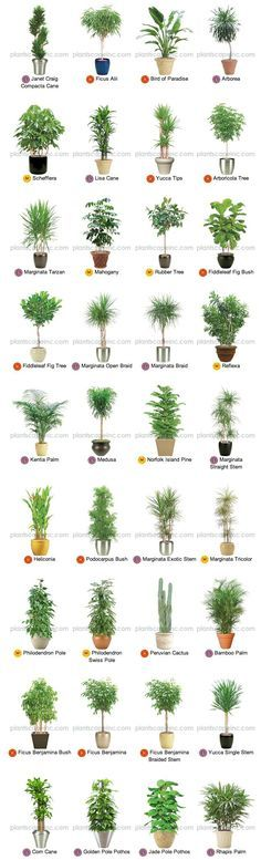 Large Indoor Plants for Interior Landscaping by Plantscape Inc.