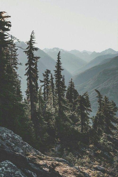 Trees, mountains