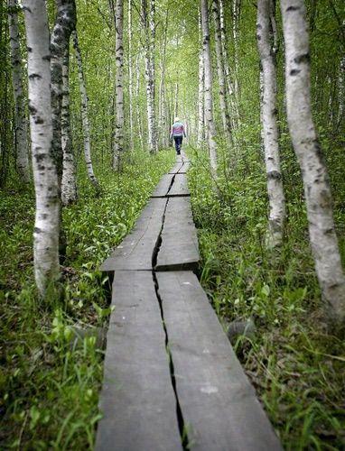 Leuku Forest, Finland