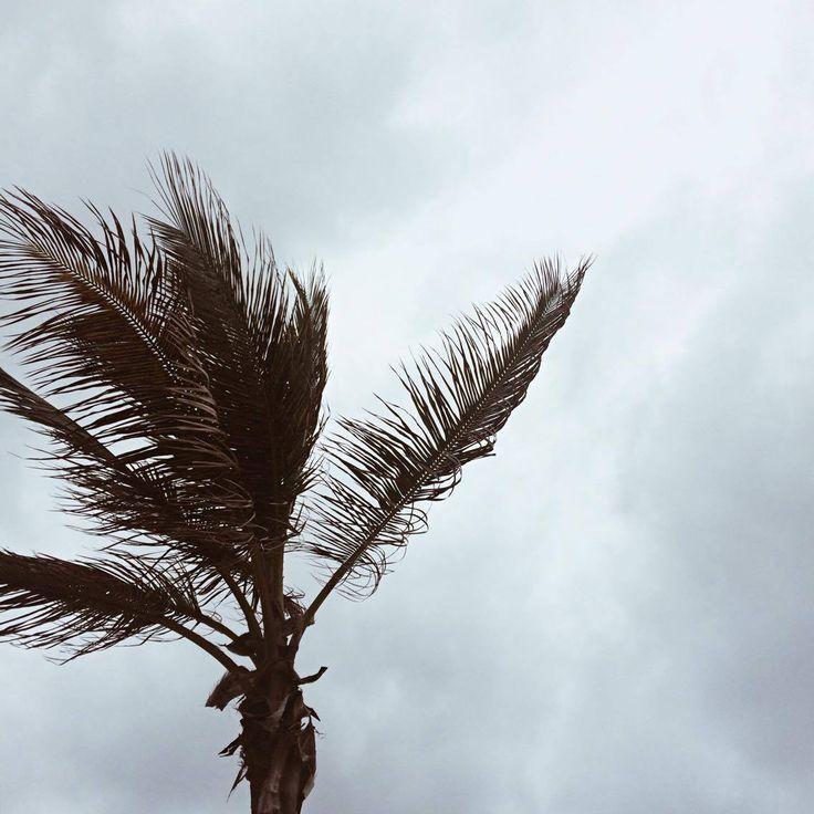 Las Palmas, Gran Canaria @karindimitrovova www.karindimitrovova.com