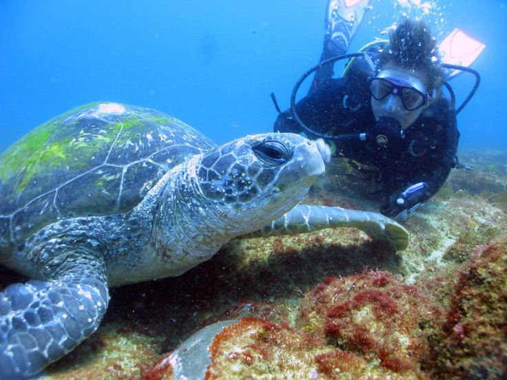 Green Sea Turtles Cook Island Cook Island is located approximately 600m offshore from Fingal Head and four kilometers southeast of Tweed Heads in Northern NSW on the Southern end of the Gold Coast, Australia