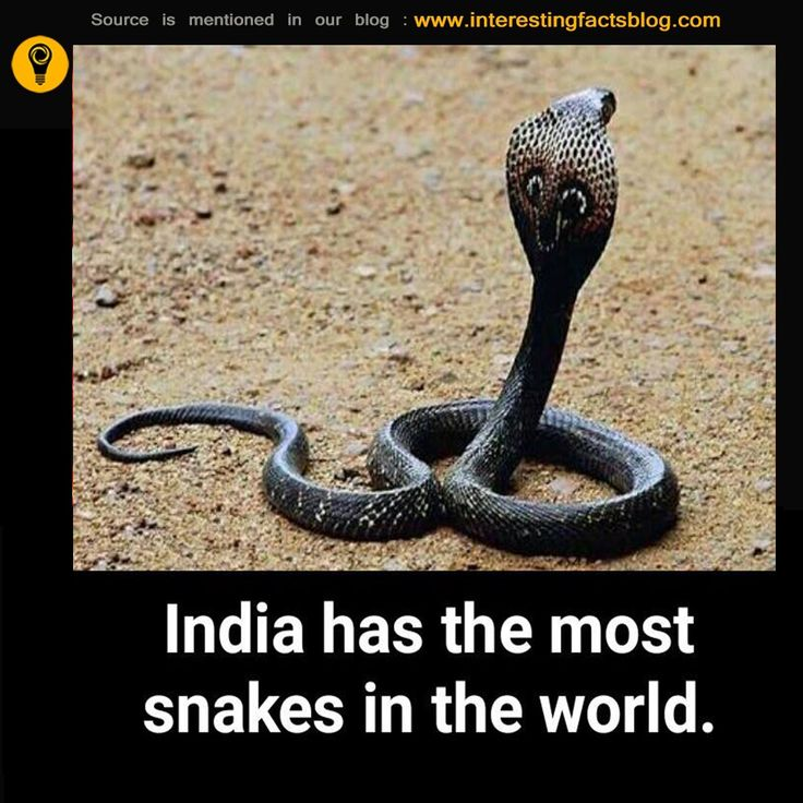 Why Does India Have So Many Snakes..?