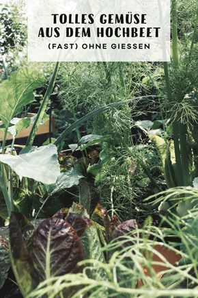 Stress Mit Giessen War Gestern Garten Pinterest Garden Garden