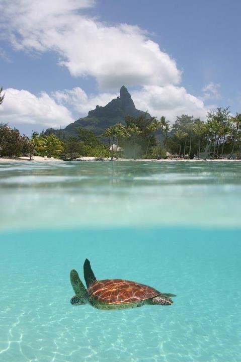 Tahiti.: Bucket List, Dream Vacation, Seaturtle, Best Quality, Beach, Places, Travel, Borabora, Sea Turtles