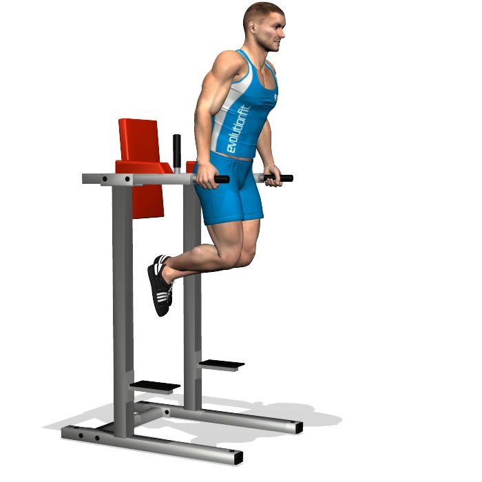 Cet exercice multi articulaire travaille sur la partie extérieure du pectoral en phase d'allongement, et la partie basse ; soit le muscle triceps. Les deux muscles sont également sollicités à tel point qu'avec des petites astuces peut être pris en considération tant pour les pectoraux que pour les triceps.  La partie antérieure du deltoïde et les muscles de l'avant bras sont impliqués en tant que muscles secondaires.