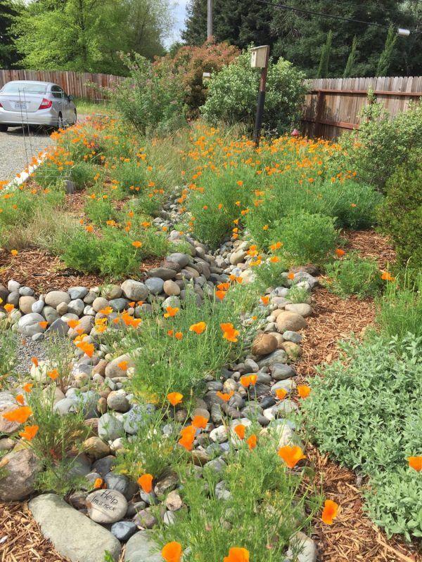 8a3275d63bf813c7fc5e8b6f6dd263c9 - Care And Maintenance Of Southern California Native Plant Gardens