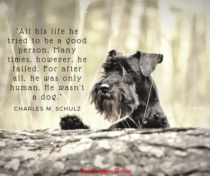 Check out these 35 dog quotes any dog parent can relate to. #dogquotes