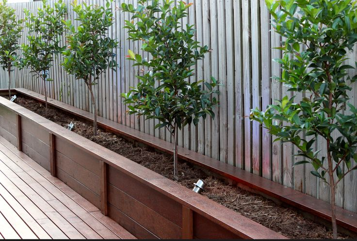 Planter on back fence? or next to portion of deck with small trees & uplights (probably solar or low voltage LED)