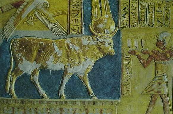 Pharaoh Rameses II making an offering to the sacred Mnevis bull. The golden bull stands on a pedestal. The bull wears the sundisk and double feathers associated with the sun-god Amon-Ra. In some myths the sun was conceived of as being born at sunrise in the form of a Golden Calf, who, during the course of the day became a Golden Bull. At sunset he mounted his mother, the sky-cow-goddess who gave him birth, impregnating her in order to be be reborn of her the next day. Above the bull flys…