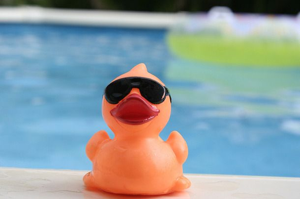 17 best images about ducks in sunglasses on pinterest - How do i keep ducks out of my swimming pool ...