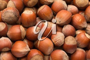 nuts, hazelnuts as background