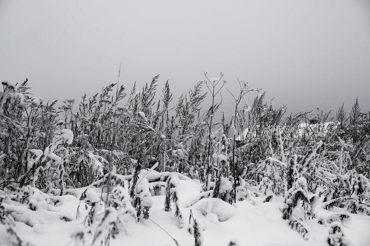 Winter field by Ivan Popov on 500px