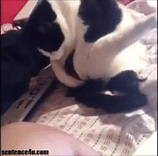Funny Cat GIFs Where are my balls, master?   Where are my balls, master?