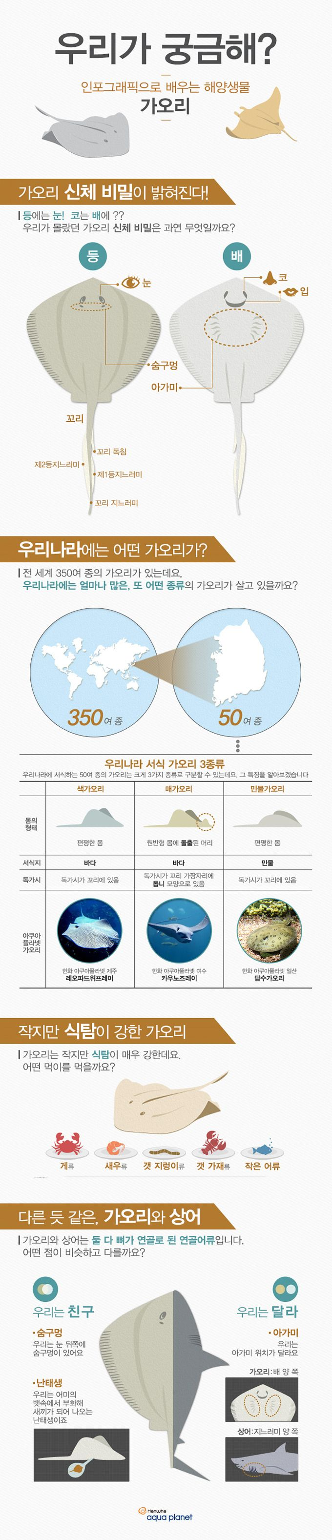 해양생물 '가오리'에 관한 인포그래픽