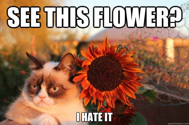Grumpy Cat Sunflower Poster. Yea I'm Famous. Go ahead, take my picture.